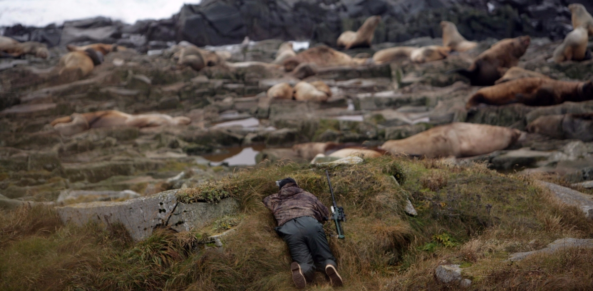 Discovering the secret lives of Steller sea lions